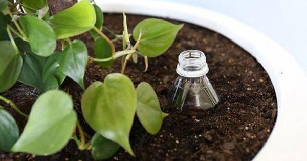 So gießen Sie Ihre Pflanzen, ohne Wasser oder Energie zu verschwenden