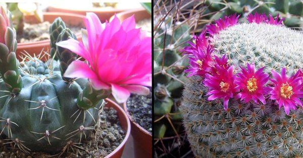 Sukkulenten: 6 prächtige und einfach anzubauende Sorten