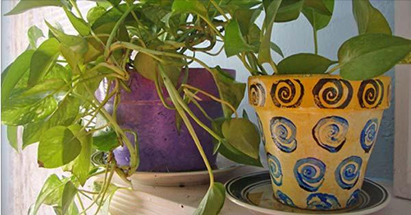 Halten Sie diese 5 Pflanzen niemals zu Hause!  Hier sind welche