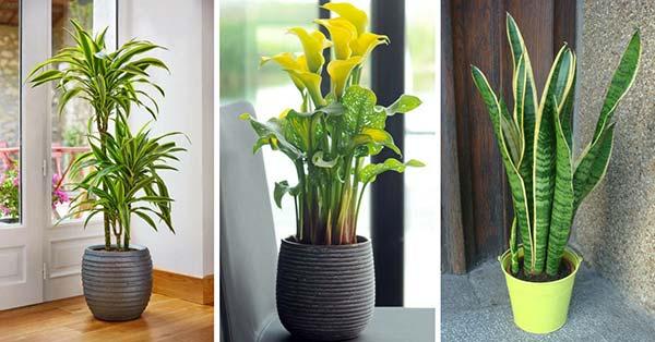 9 Pflanzen, die auf natürliche Weise verschmutzte Luft zu Hause reinigen