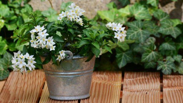 10 Pflanzen für Ihr Zuhause mit entspannender Kraft