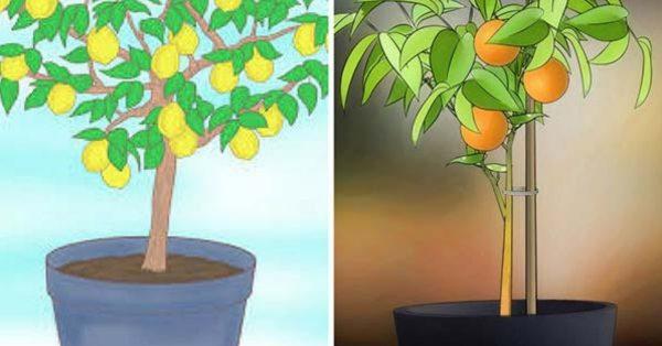 Wie man 6 Obstbäume anbaut